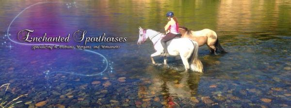 Enchanted Sporthorses