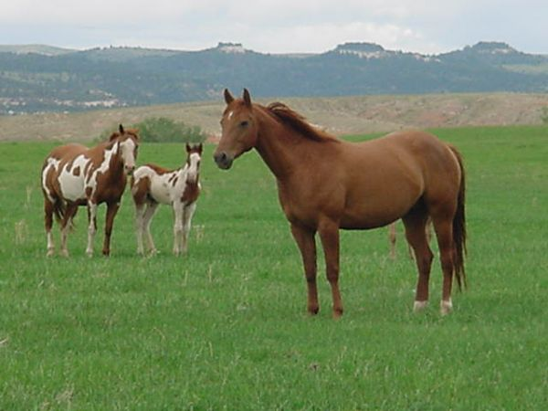 Broken Back Ranch Quarter Horses