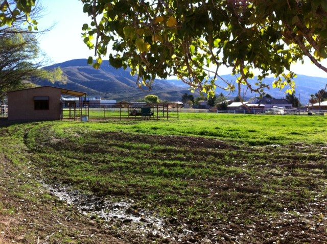 High Sierra Horse Farm