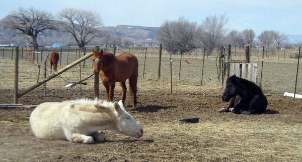 Amanda's Foundered Friends Horse and Equine Rescue