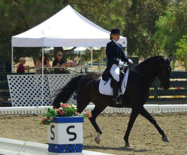 Dressage For All Disciplines