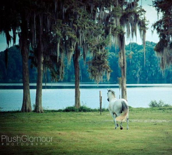 Lake Howell Equestrian Center