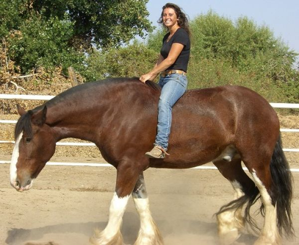 Your Location Horse Training 500 weekly