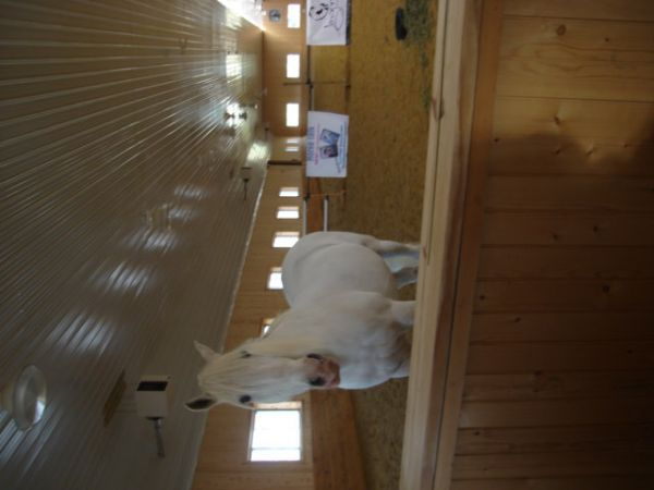 Mid-Atlantic Equine Appraisal