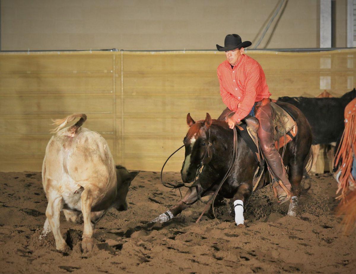 Tracy Surles Cutting Horses