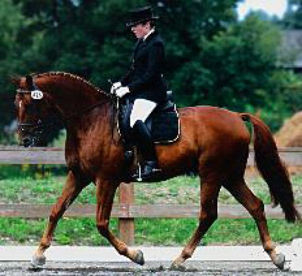 M  M Dressage with Trainer Meghan Markham