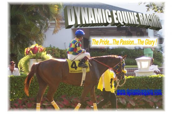 Dynamic Equine Thoroughbreds