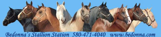 Bedonna's Stallion Station and Performance Horses