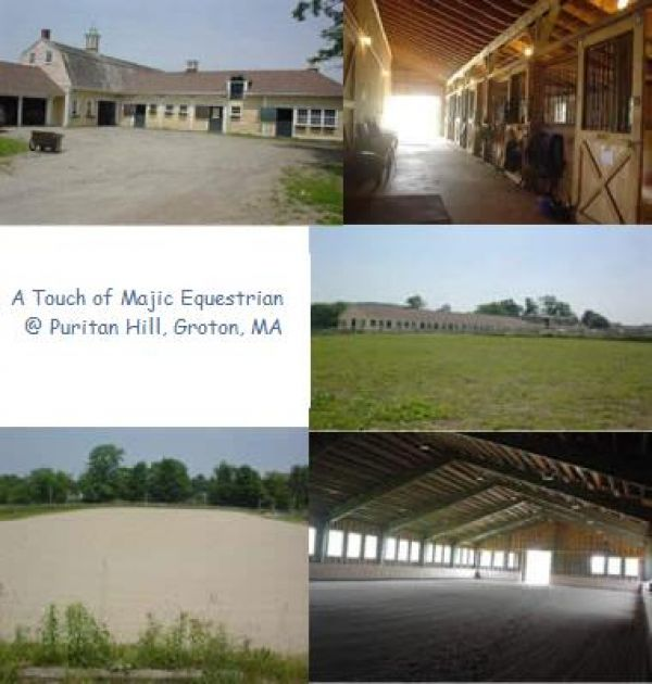 A Touch of Majic Equestrian  Puritan Hill