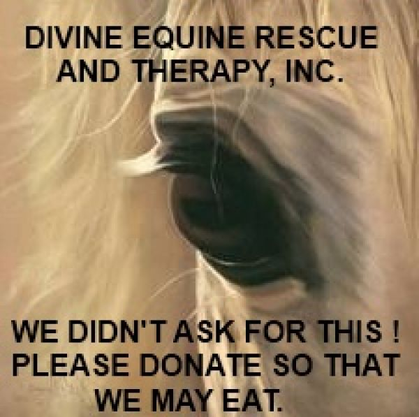Divine Equine Rescue and Therapy, Inc.