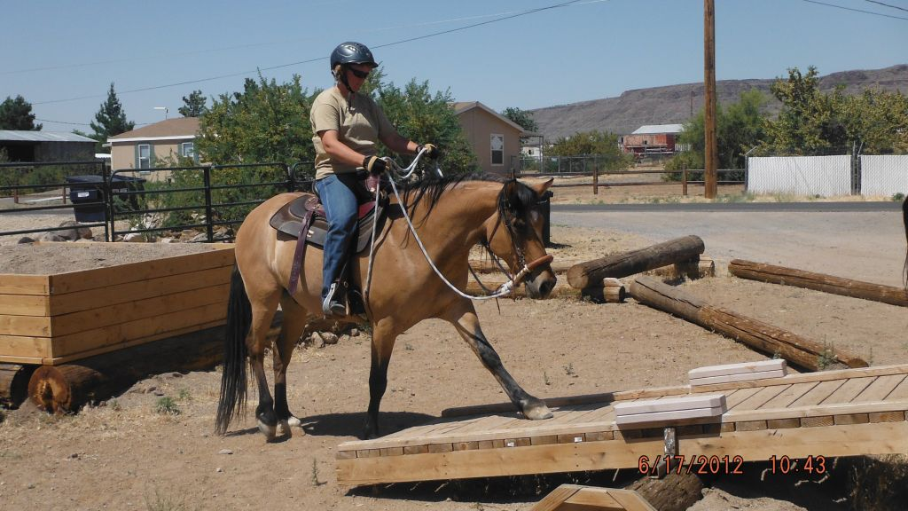 A-Schuerr-Thing Horse Training and Riding Lessons