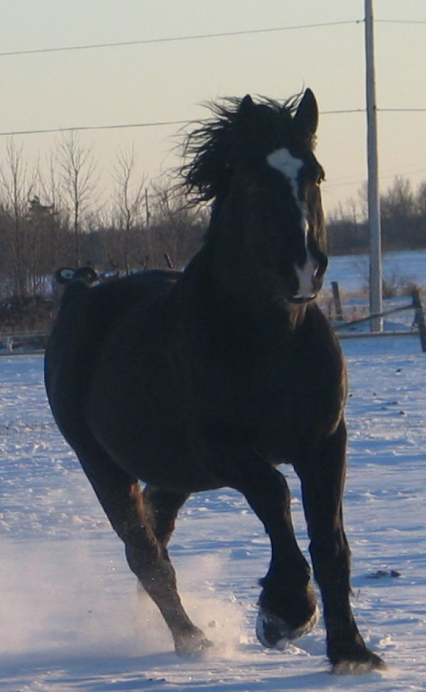 Irish Creek Percherons