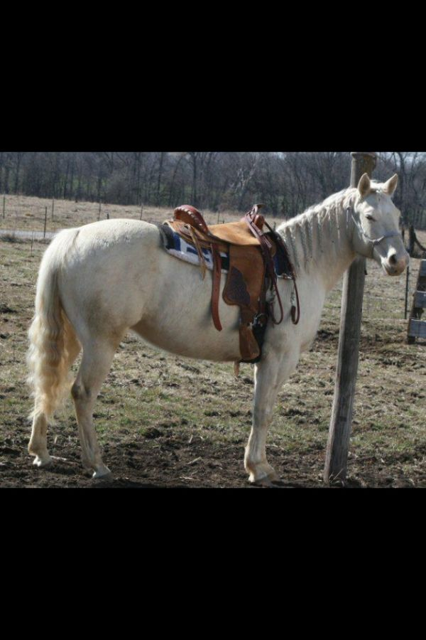 Grizzly Ridge Performance Horses