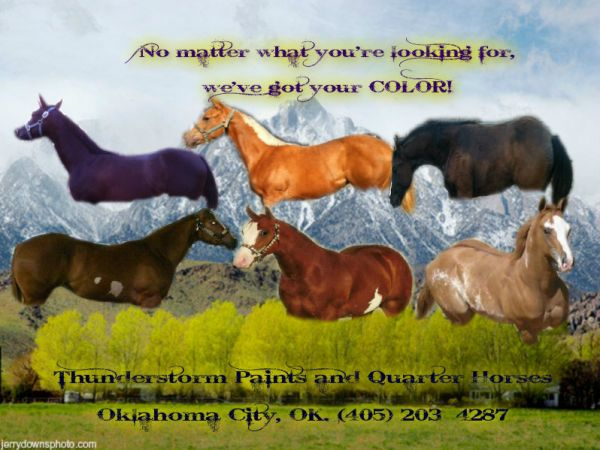 Thunderstorm Paints and Quarter Horses