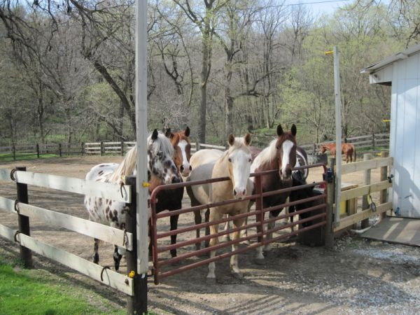 Country Trail Stables