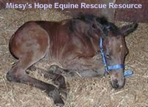 Missy's Hope Equine Rescue Resource