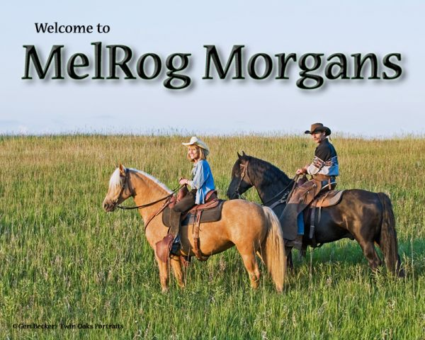 Melrog Morgan Farm