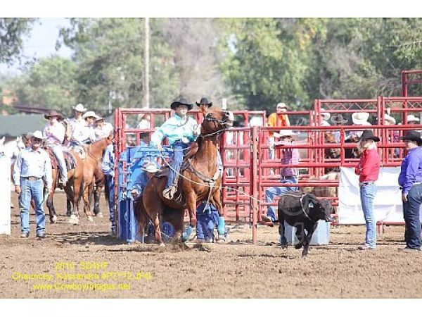 Ranch and Rodeo Horses