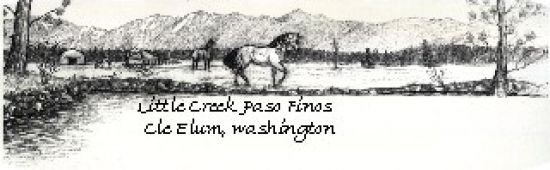 Little Creek Paso Finos
