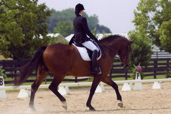 Dressage Solutions MD