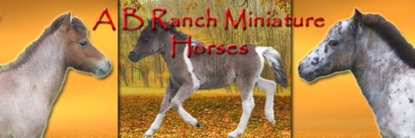 A B Ranch Miniature Horses