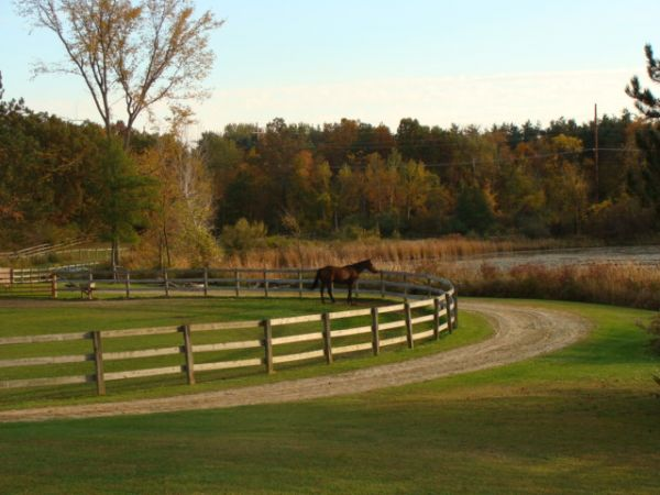 Meadow Lake Farm