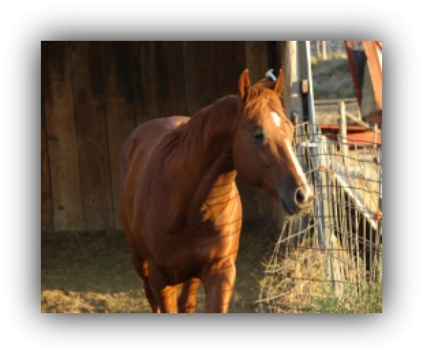JB Quarterhorse Ranch