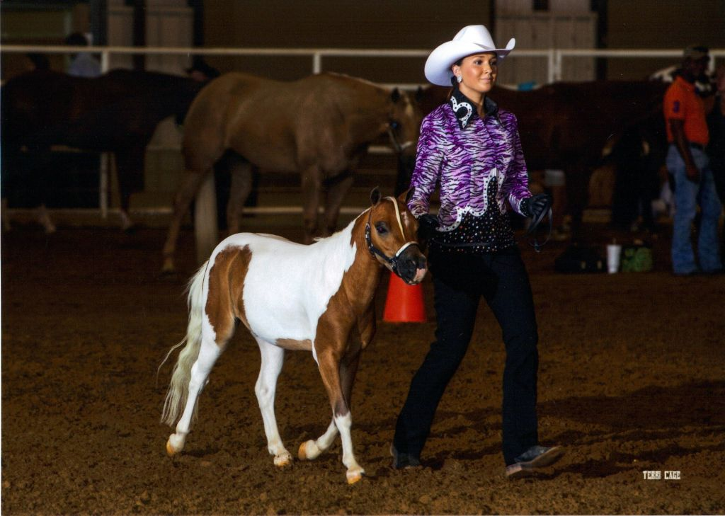 Relentless Miniature Show Horses