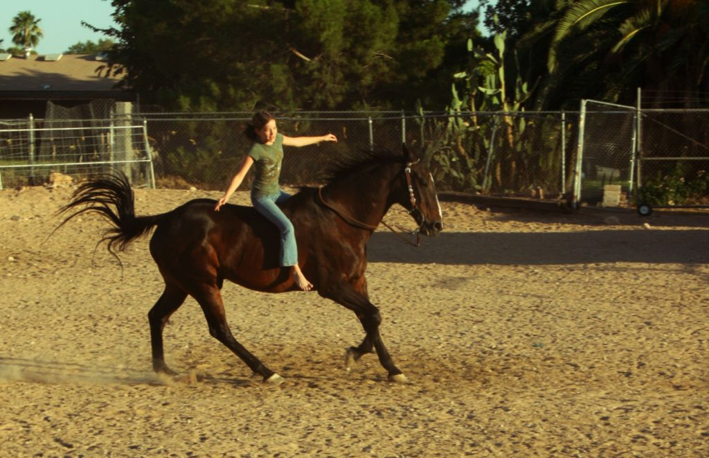Galloping With Guidance