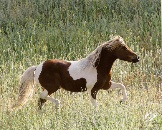 ... Miniature horses? at the Horse Breeding forum - Horse Breeding Forums