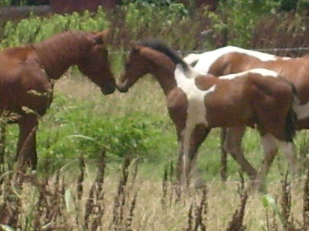 Quarter Horse News Magazine Quarter Horse News Qhn