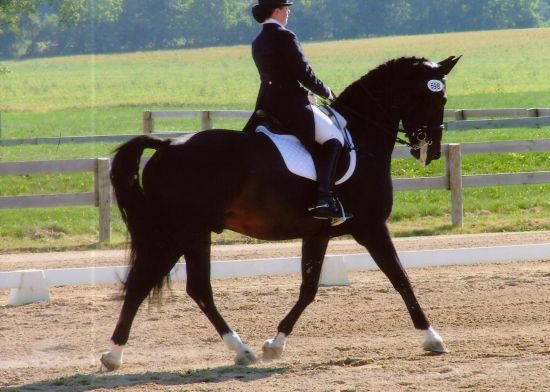 Truly Dancing Dressage