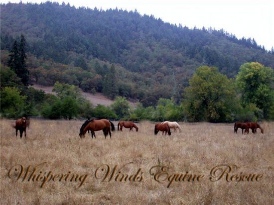 Whispering Winds Equine Rescue
