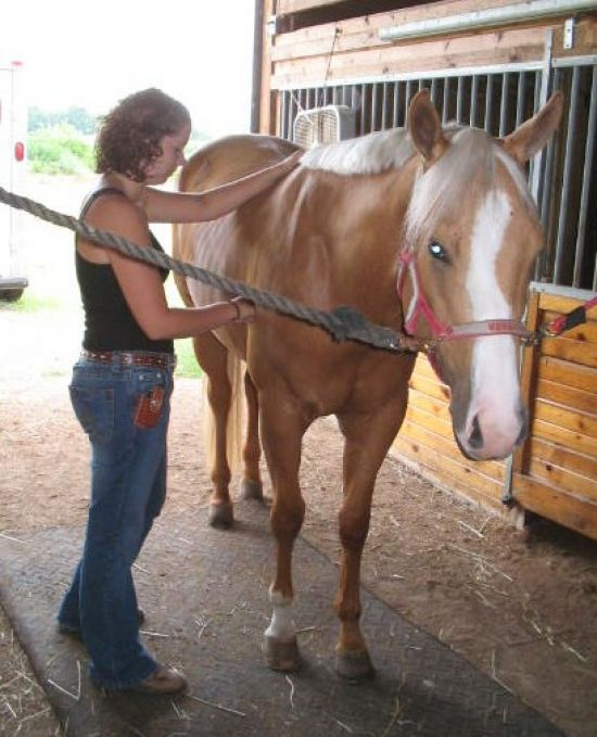 equine massage therapy Educational and fun clinics to show you how to recognize signs of sore muscles, stretching techniques and basic massage you can do on your own horse.