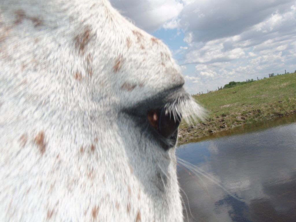 Through the Eye of Equus