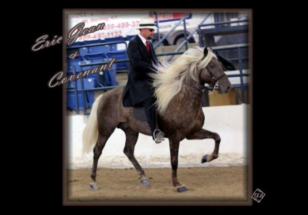 Dream Catcher Enterprises. Mountain Horses