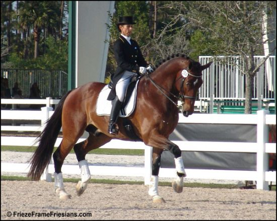 Quality Equestrian Connections Dressage