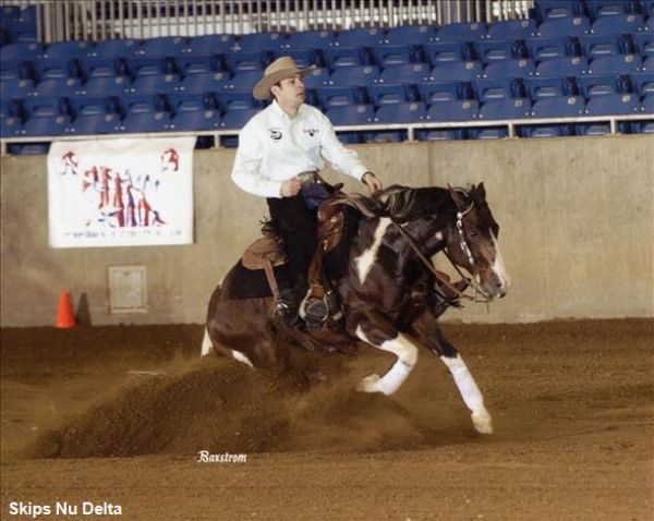 Keller Performance Paints Performance horses in Co