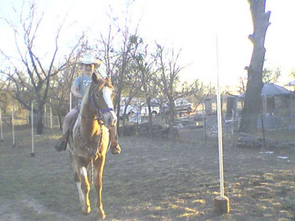 Calf Roping Horse Calf Roping Horses For Sale by