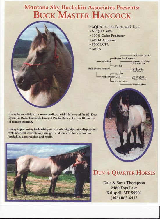 Dun 4 Quarter Horses  Little Bitty Ranch