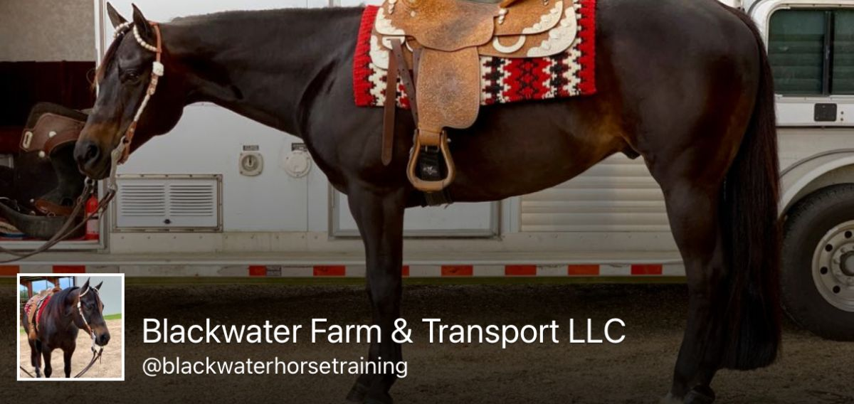 Blackwater Horse Training