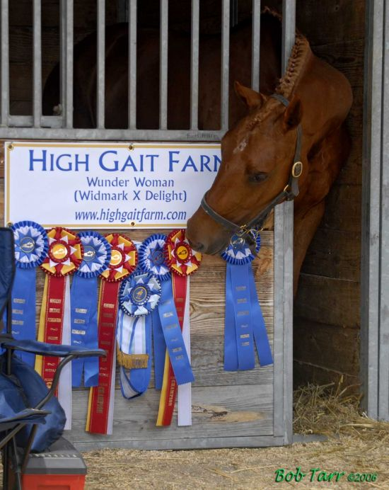 HIGH GAIT FARM HANOVERIANS
