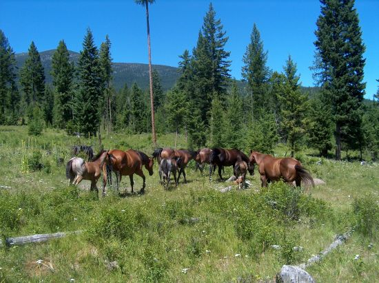 Stucker Quarterhorses
