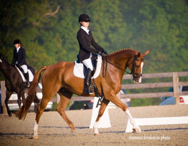 Grace and Glory Equestrian