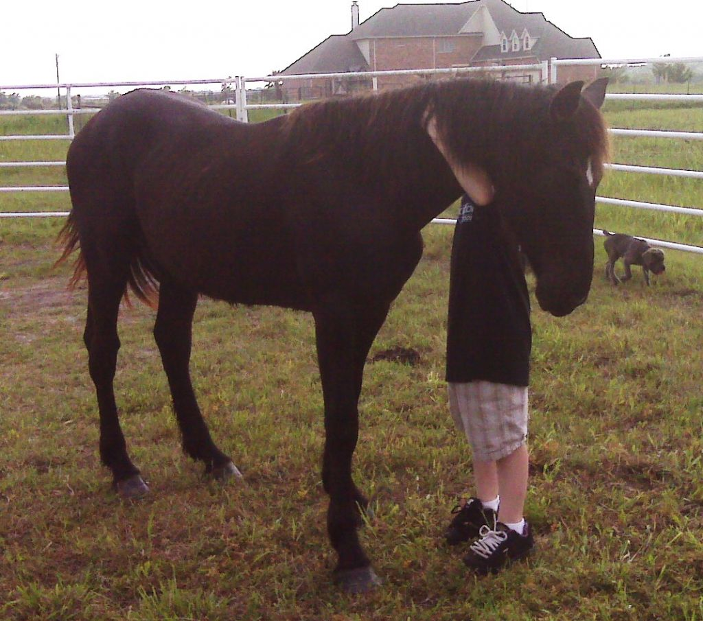 Fantasy Friesians of Texas