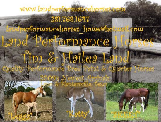 Land Performance Horses