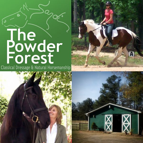 The Powder Forest, Dressage & Natural Horsemanship