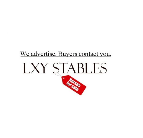 Lxy Stables Equine Advertising