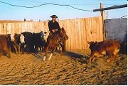 hall natural horsemanship