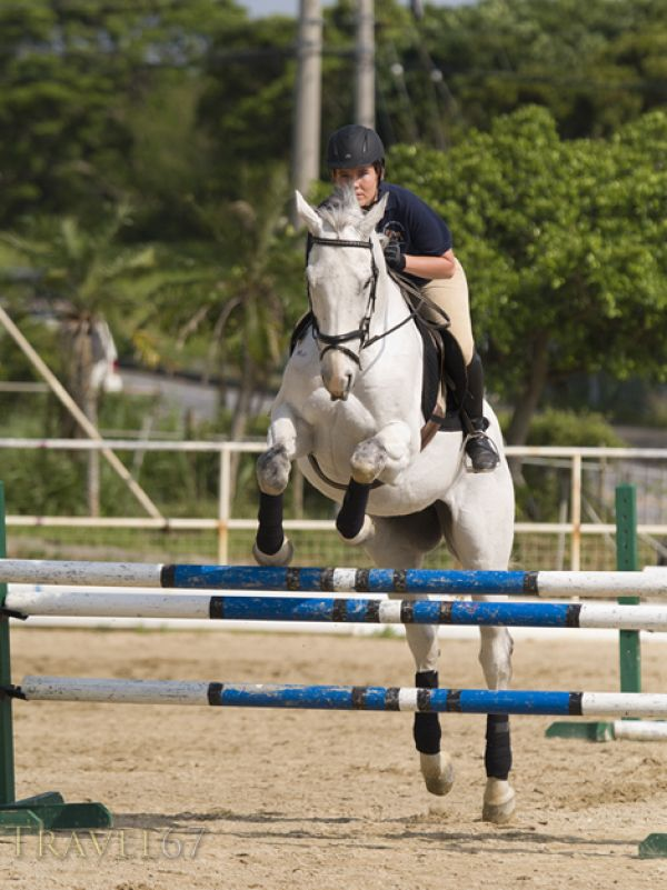 Pick and Tuck Dressage and Eventing